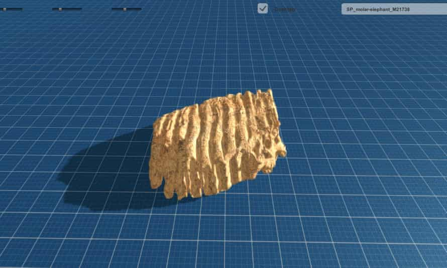 A computer-generated image of an elephant molar used to print a 3D replica