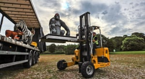 Prescot, UK. A silverback gorilla built from Lego arrives at Knowsley safari park, Merseyside. It is one of 82 life sized animals made from more than 1m bricks that will be on display, along with a Bengal tiger, an elephant and penguins