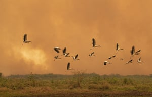 Birds fly past as a fire consumes an area next to the Transpantaneira road.