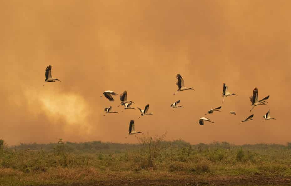 Scientists say that increasingly intense wildfires have put unprecedented attention on the impact to birds.