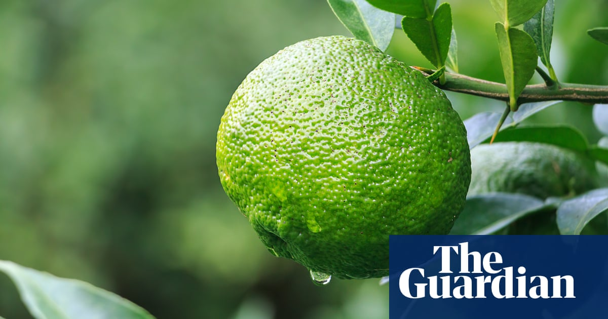 Yuzu: the citrus fruit that looks like it fell off a lorry | Food