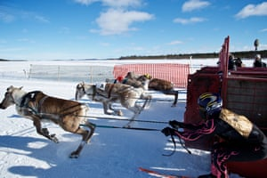 The start of the 1km race, as the animals run in groups of four on the first day of the event.