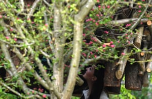 The Duchess of Cambridge visits her garden at Chelsea Flower Show in London. It was inspired by shinrin-yoku.