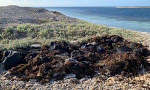 About 40 bags of illicit drugs concealed under seaweed were found on a West Australian island.