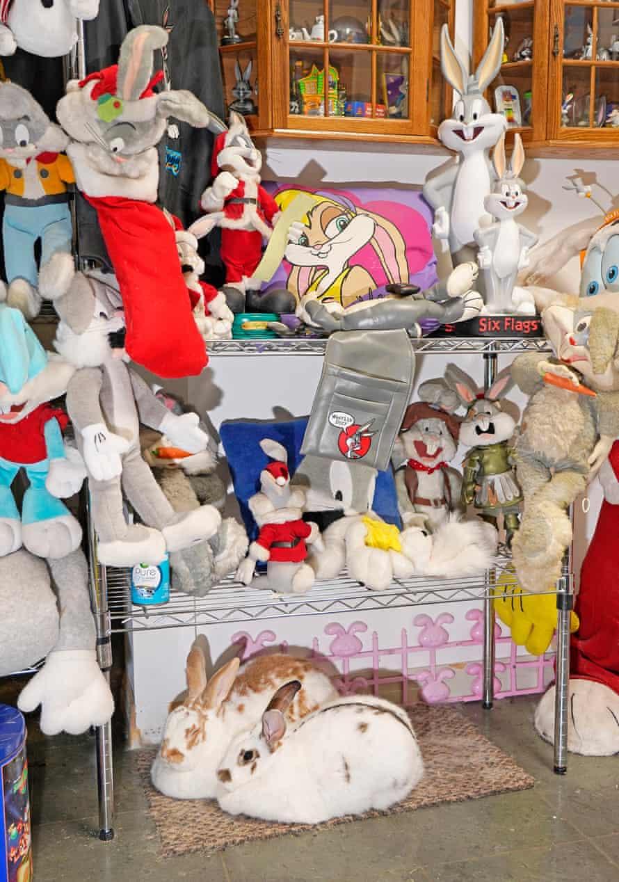 Real bunnies (below) and fake bunnies (above).