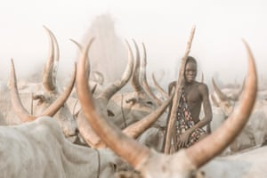 A man surrounded by horned cattle