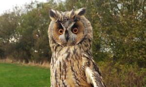 A long-eared owl near the East Yorkshire coast.