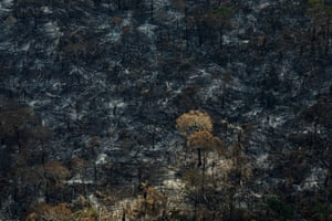 Land-grabbers have deforested large areas of the territory