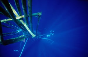 """A diver swims below a """"fish aggregating device"""" made from bamboo poles"""