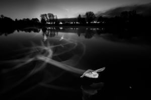 Overall winner: Contrails at Dawn (Daubenton's Bats), Coate Water Country Park, Wiltshire