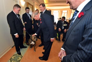 Prince Charles greets a dog as he meets wounded war veterans.