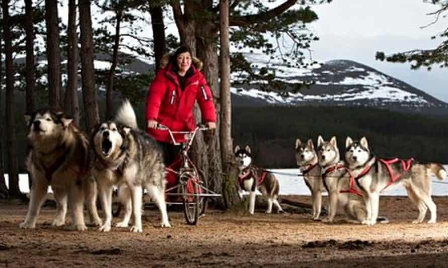 Aviemore sled dog rally