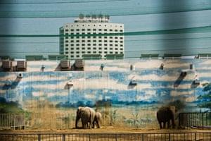 Elephants at Beijing zoo