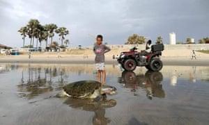 A dead turtle in Kololi/Bijilo