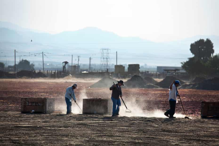 Farmworkers in Lamont, California.