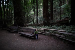 A child plays in Muir Woods. The park has implemented a parking reservation system to ease crowding.