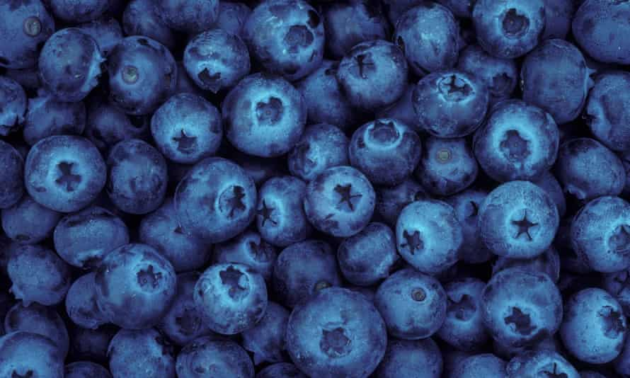 Blueberries Oregon. Local farmers are worried by increases in minimum wage