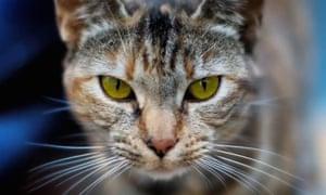 """Internet cat Video Festival at Yerba Buena Center for the ArtsGoersch & Rob A Fella - Kratzbaum, by Simon Glass3 -credit-Internet cat Video Festival at Yerba Buena Center for the Arts"""