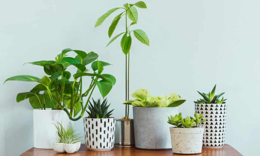 Plants on a table
