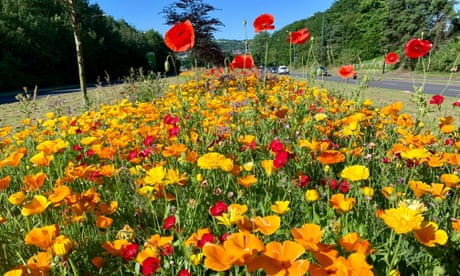 The Guardian view on lawns and verges: go wild