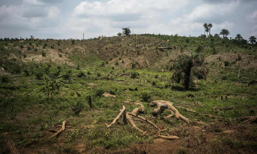 Deforestation due to land clearing for palm oil production