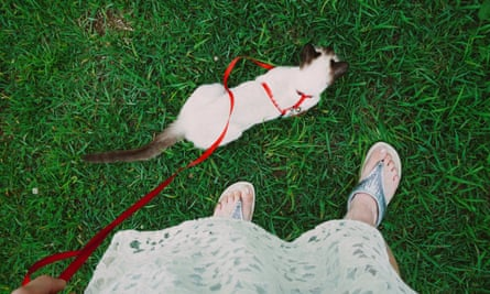 Taking the lead: a woman exercises her cat