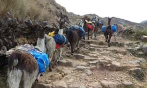 Our llamas ascending an Inca Road staircase