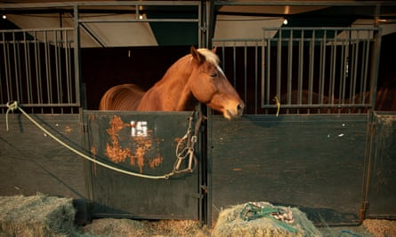 Most of the horses were brought to shelters by their owners. Some were found abandoned or escaped in the midst of the chaos.