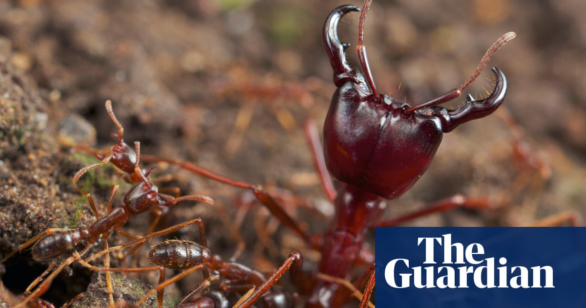 'The path was alive with army ants!' – readers' holiday encounters with nature