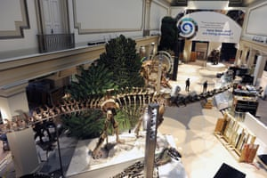The new dinosaur and fossil hall at the National Museum of Natural History.