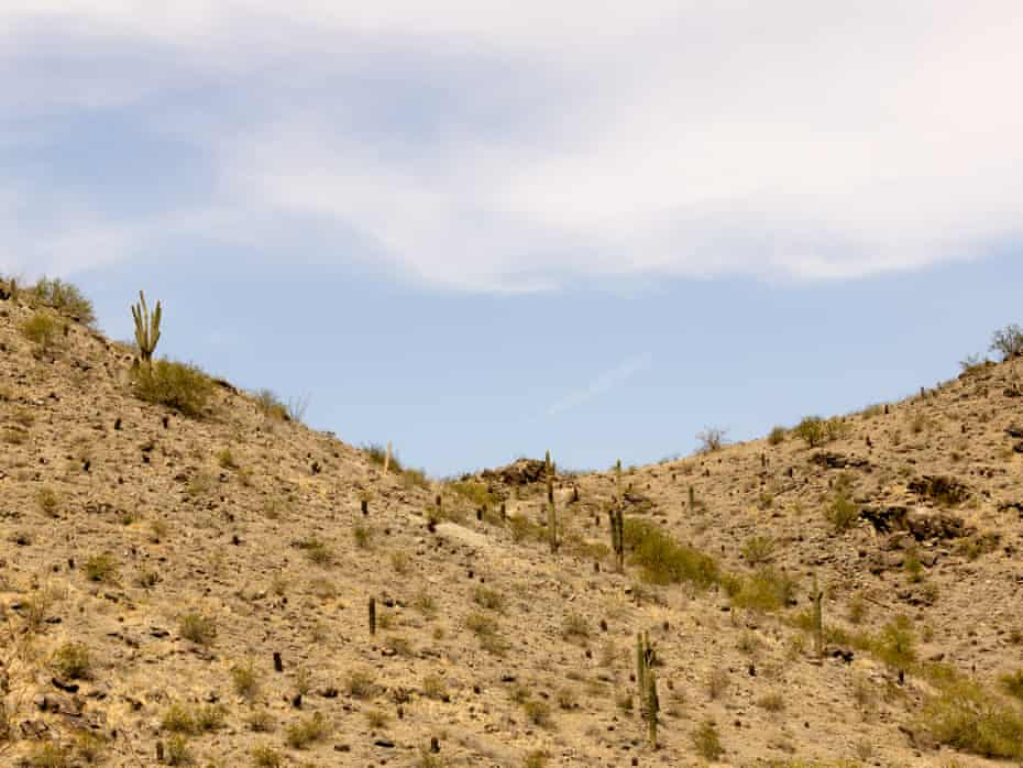 Saguaros in the landscape at South Mountain Preserve in Phoenix.