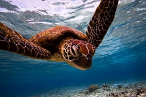 Turtle Portrait  Deep and Meaningful category  Adult Runner Up