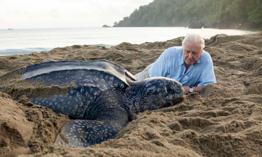 A leatherback turtle with David Attenborough in Trinidad