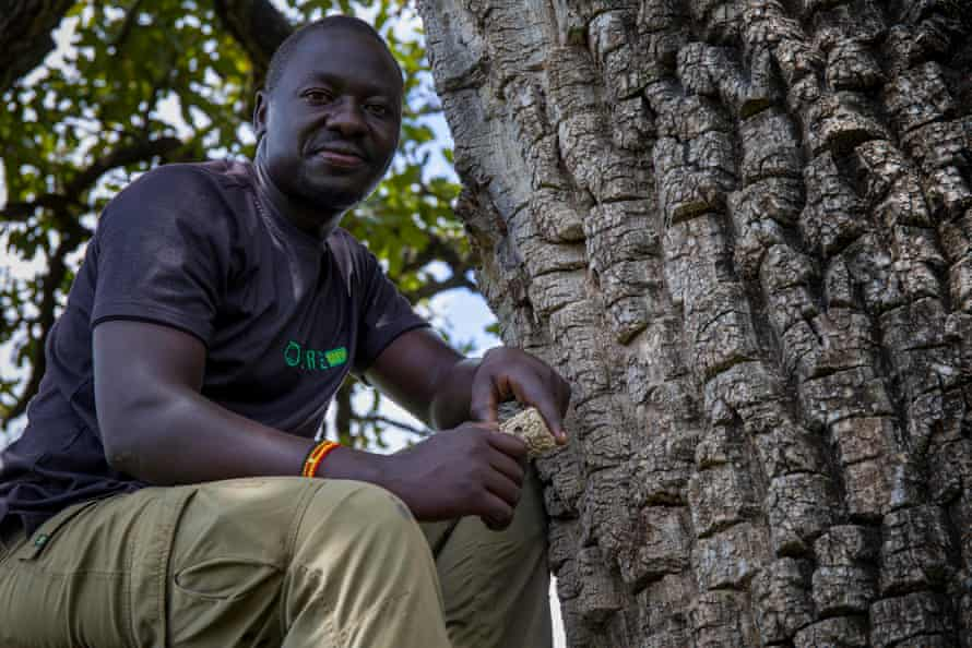 Ojok Okello sits under a shea tree in Okere City, which is now marketing its own shea butter
