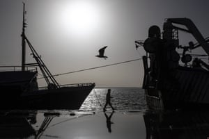 A seagull flies past a worker and a fishing vessel docked in the main port in Dakhla