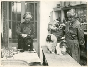 Combing dogs for fur for knitting, Portsmouth, Hampshire, 1943.