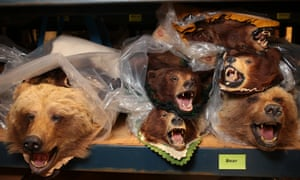 Bears on shelves inside the National Wildlife Property Repository in Commerce City, Colorado, U.S., on Wednesday, May 31, 2017. Photographer: Matthew Staver