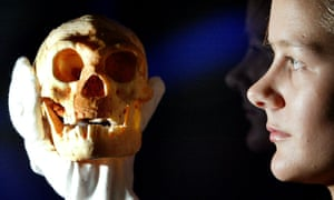 A model of a skull from a species of Hobbit-sized humans called Homo floresiensis, which was found in a cave on the Indonesian island of Flores.