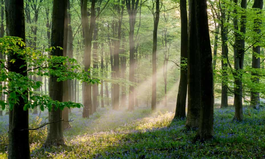 The village and its woods are watched over by Dead Papa Toothwort, an ancient spirit. Photograph: Kentish Dweller/Alamy