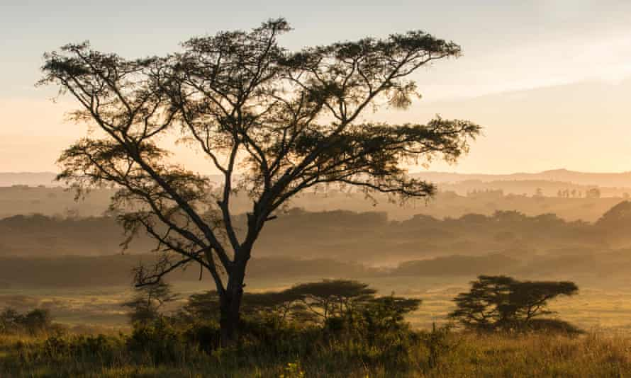 Queen Elizabeth national park, Uganda … Kintu is a complex profile of a family and a country.
