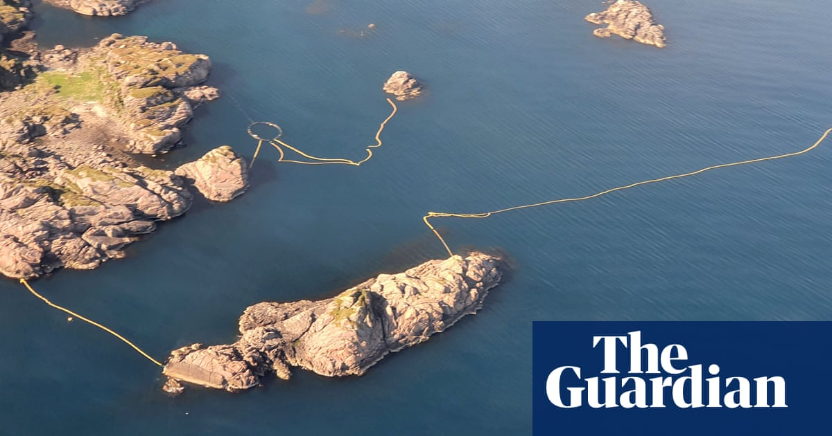 Norway to conduct 'cruel' minke whale tests despite opposition
