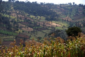 Parts of Kenya's forests have been degraded to make way for maize plantations.