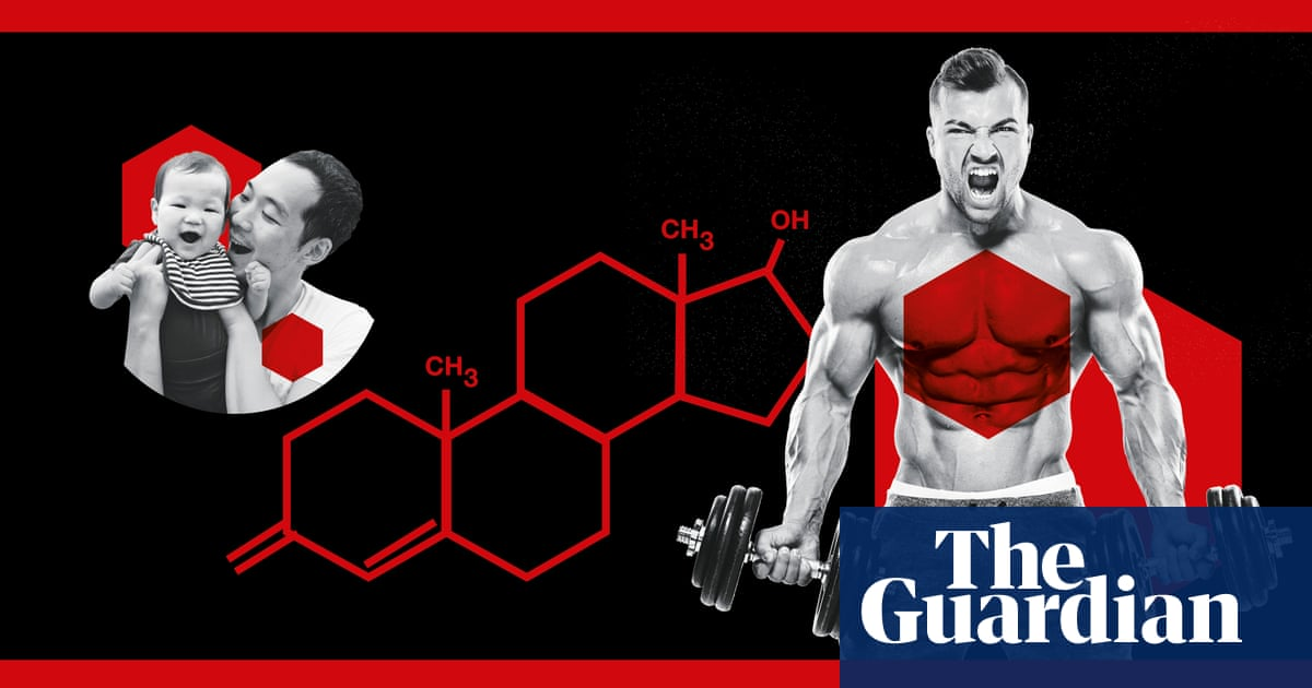 Does testosterone make you mean?   Science   The Guardian