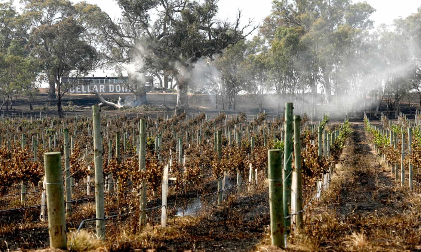 How bushfires have hit Australia's winemakers
