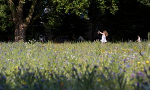 Urban meadows at London Fields, Hackney