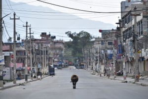 A cow walks along an empty highway road in Bhaktapur, Nepal, on 19 April.