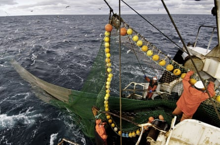 Coalfish fishery in the North Sea.