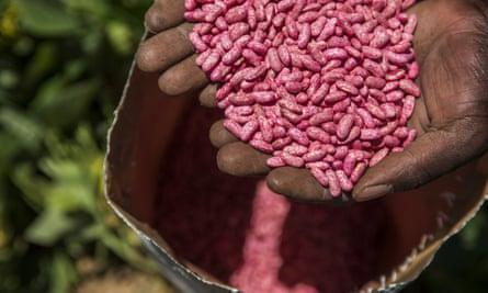 A farmer handles a bag of Syngenta AG bean seeds in Johannesburg, South Africa.