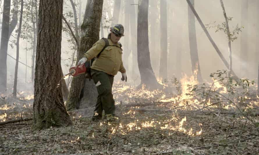Joe Jerry conducts a prescribed burn using a drip torch. Prescribed burns may have cultural objectives, but they tend to be planned primarily for clearing the leaves, brush and small trees that fuel large wildfires.