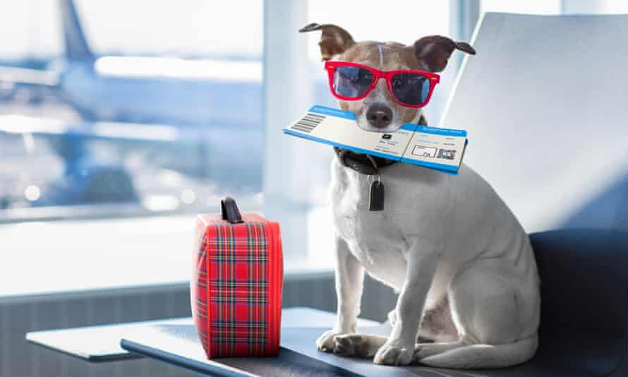 A dog waiting in an airline lounge